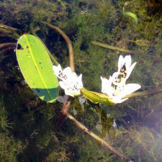 Onderwaterplanten